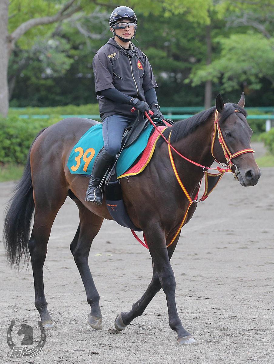 アルムブラストの馬体写真