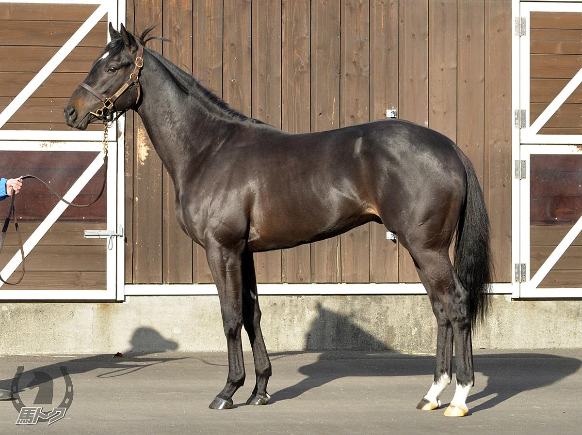 レヴィオーサの馬体写真