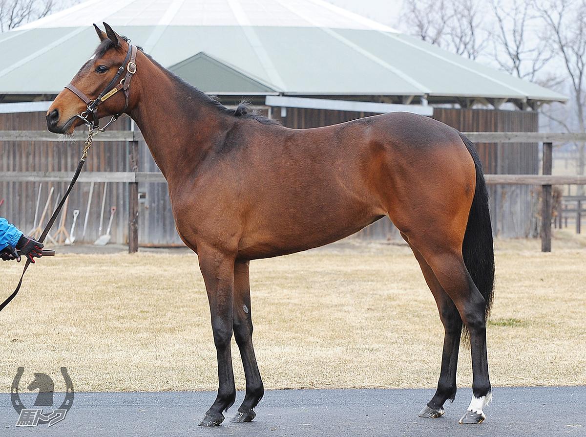 ヴィルトゥオシタの馬体写真