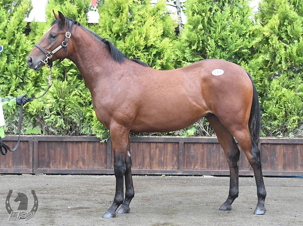 キンブレルの馬体写真