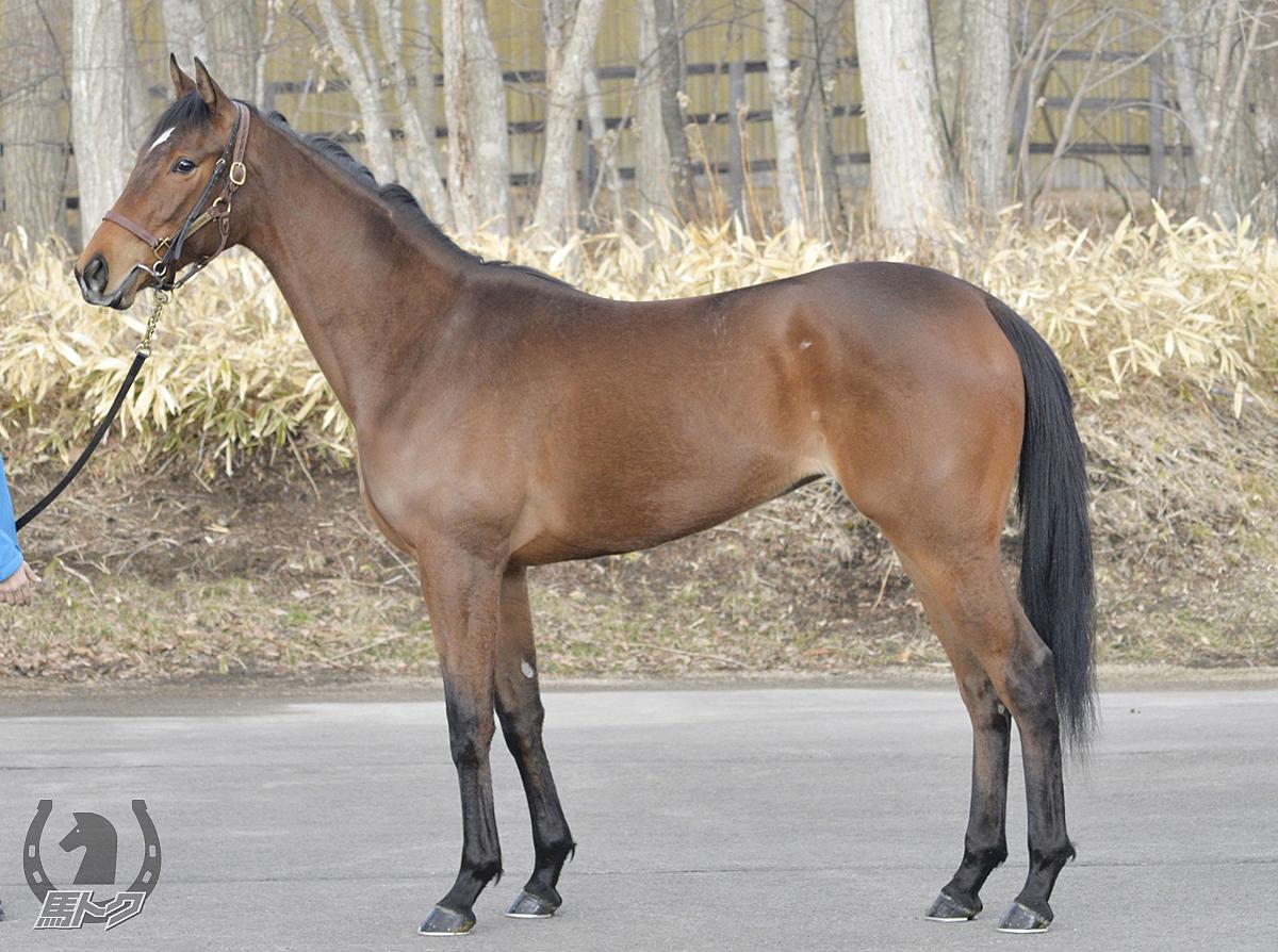 バトーデュシエルの馬体写真