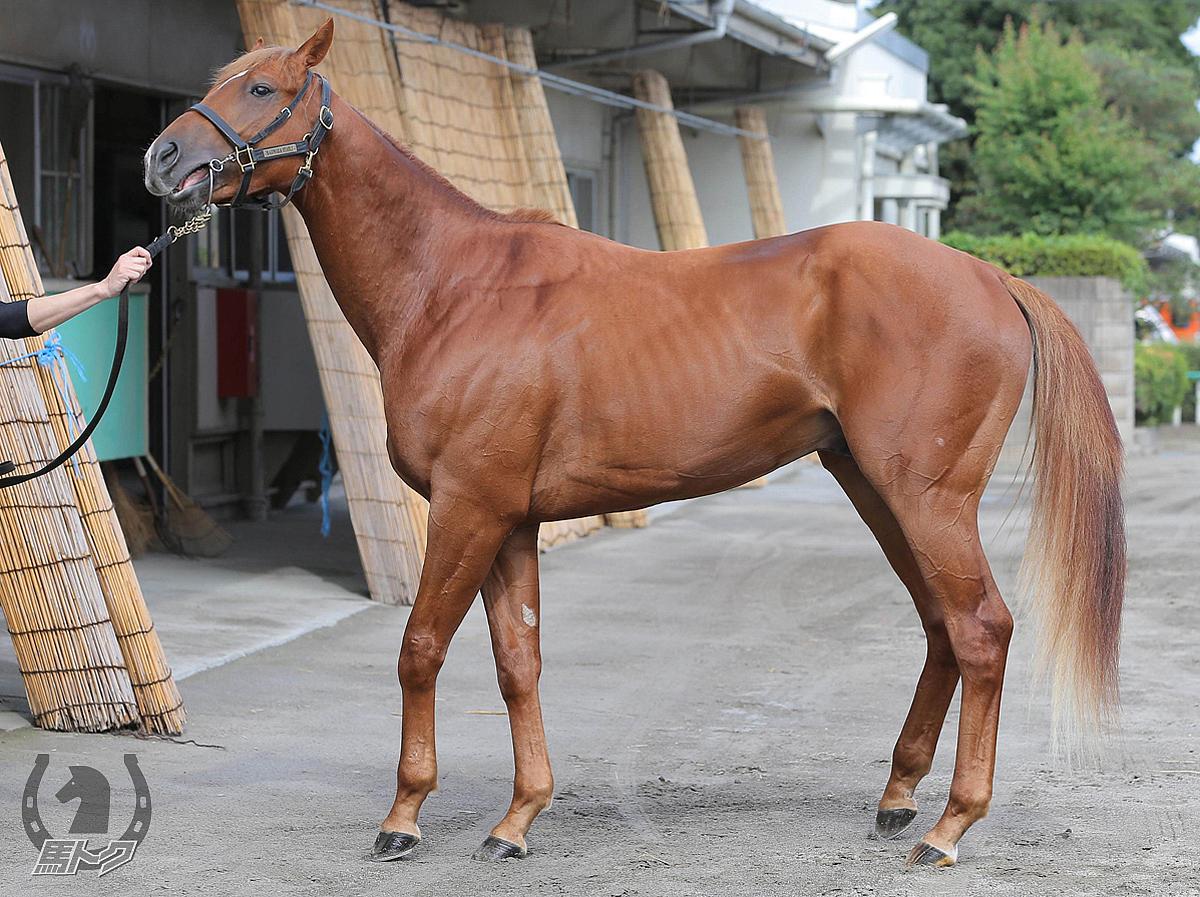 トライフォーリアルの馬体写真