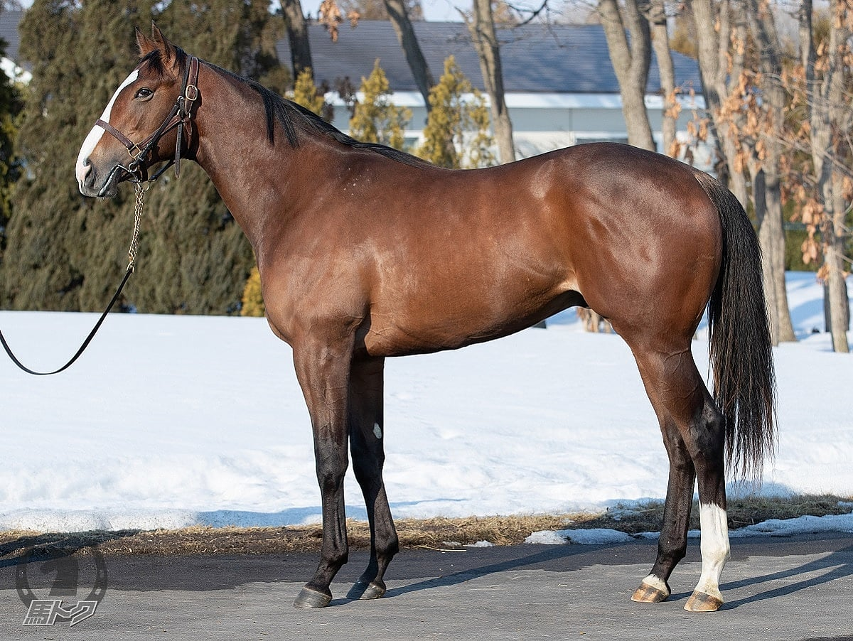 ケープオブストームの馬体写真