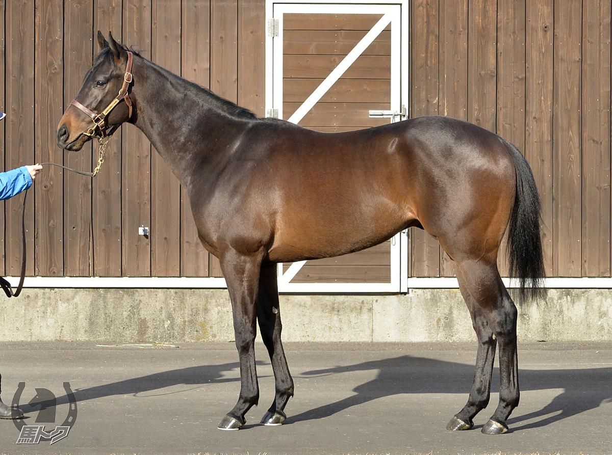エボカシオンの馬体写真