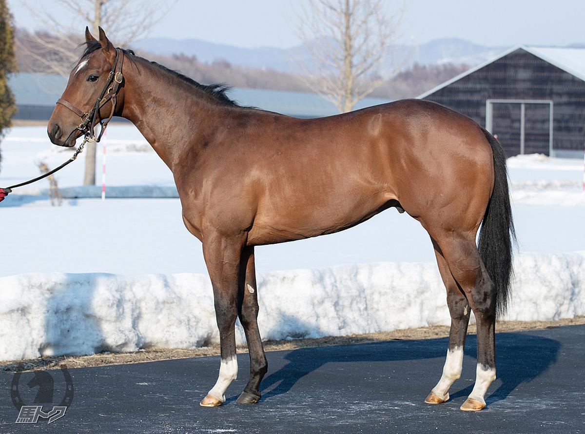 マクラーレンベールの馬体写真