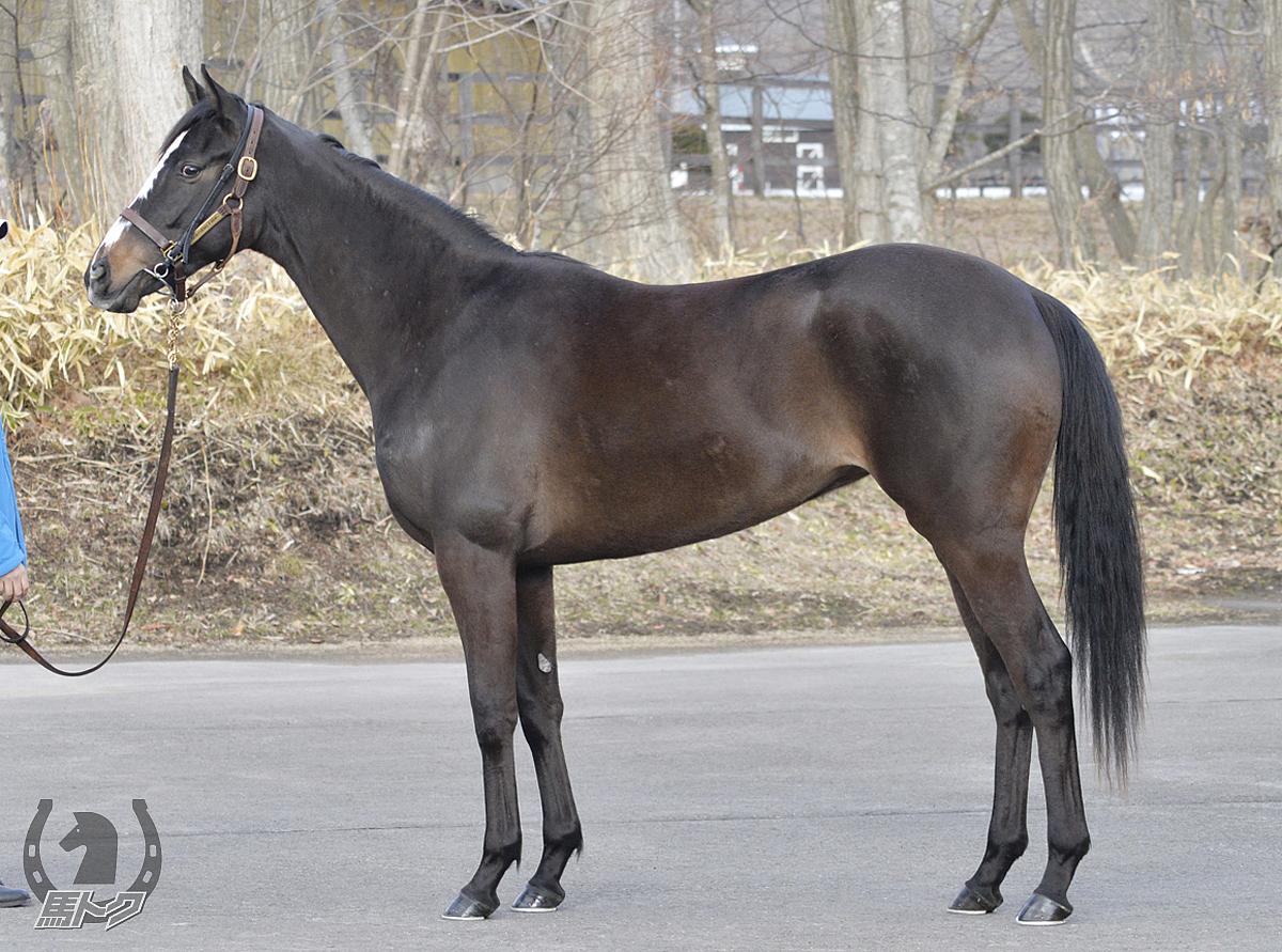 アドマイヤミモザの馬体写真