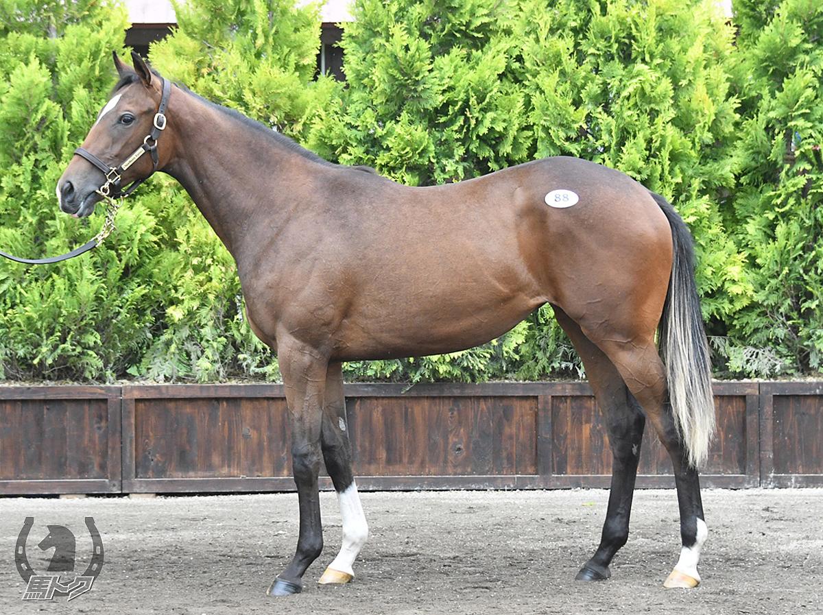 フィリポナの馬体写真