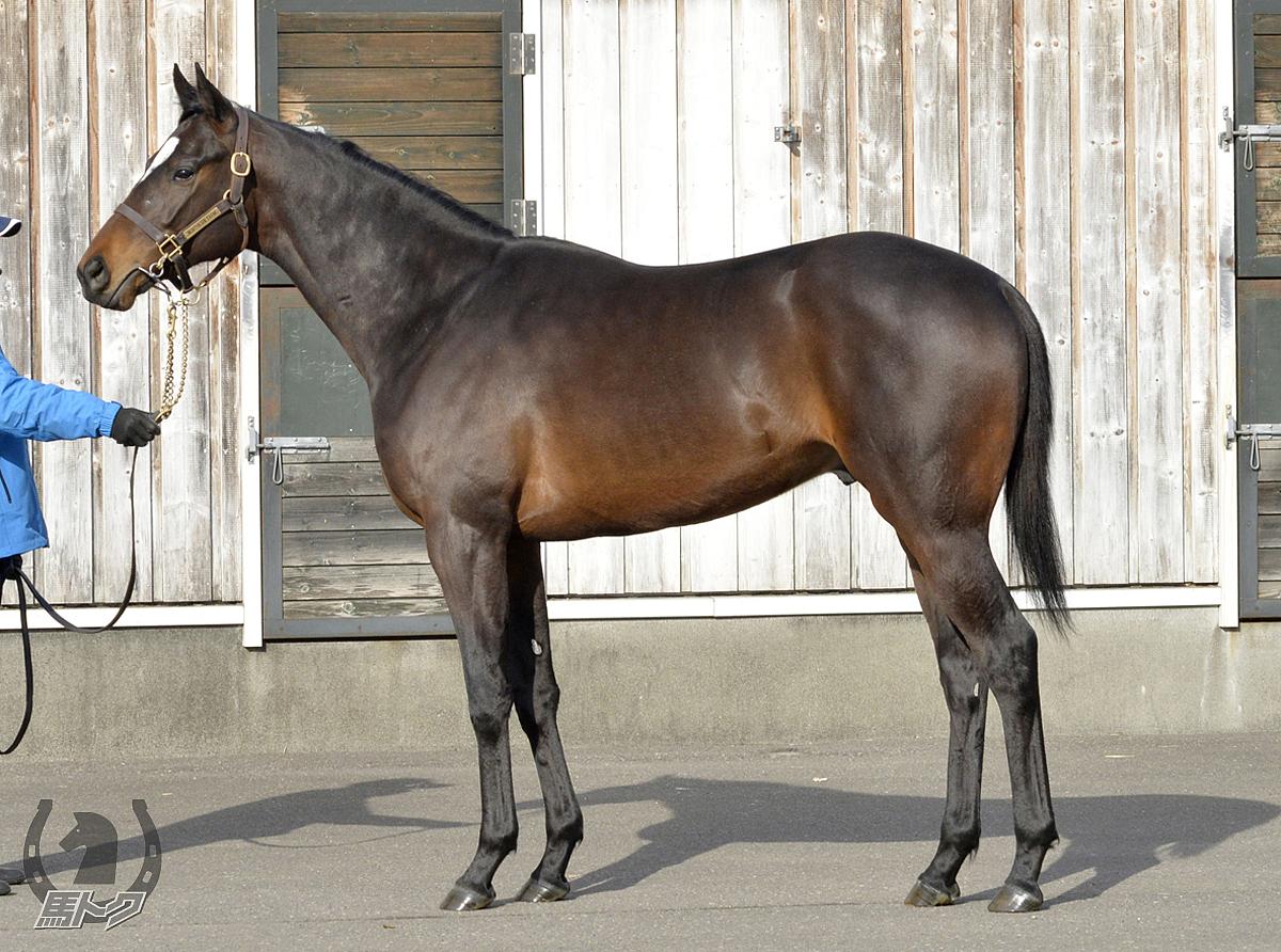 ダノンレガーロの馬体写真