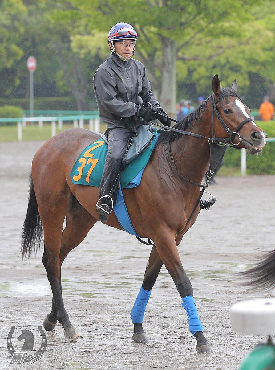 ロジアイリッシュの馬体写真