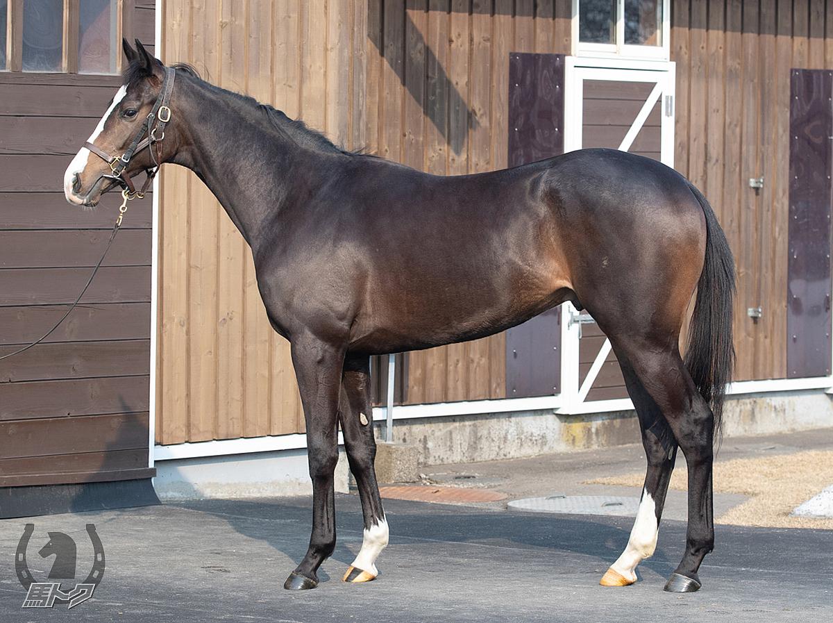 ラクンパルシータの馬体写真