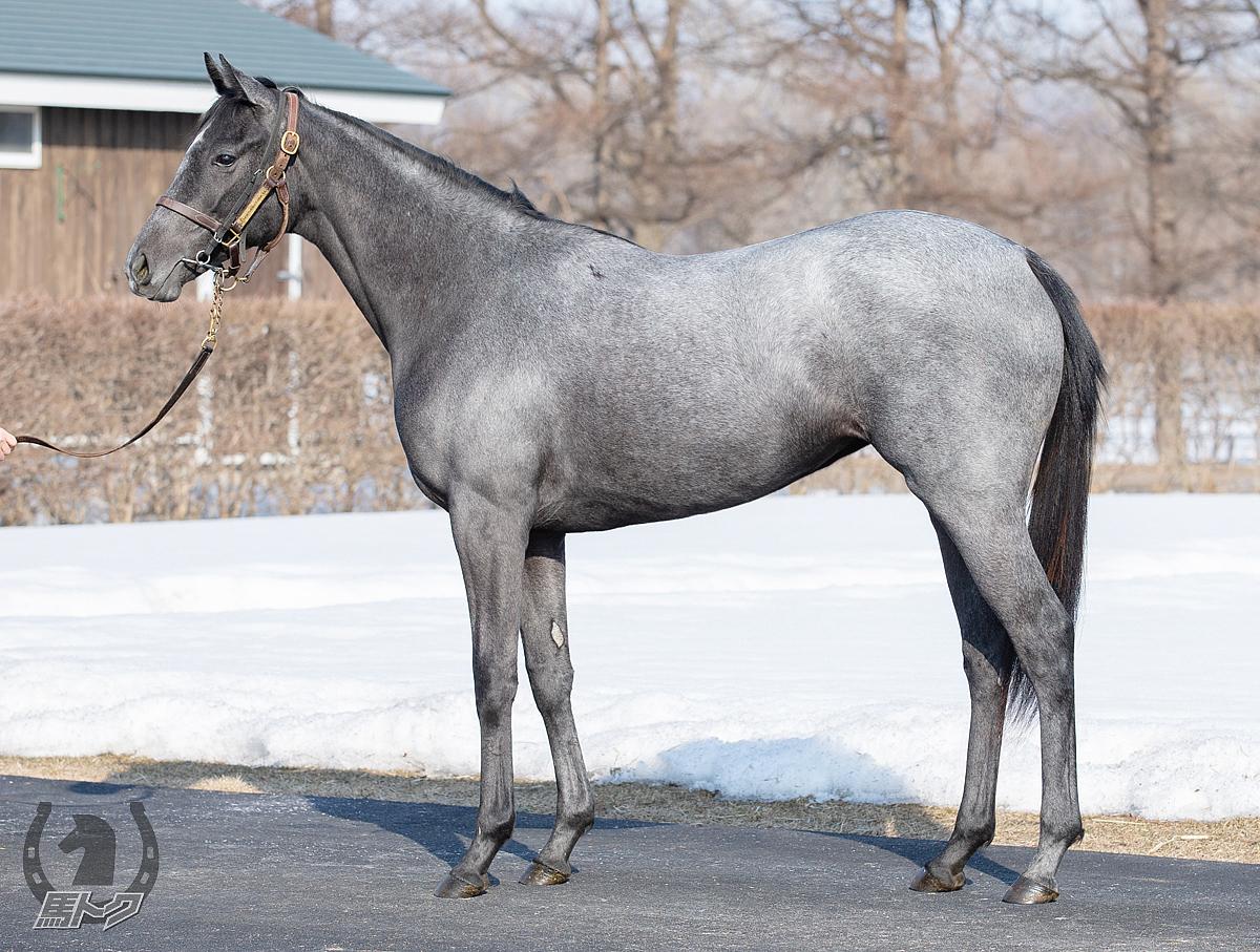 クロトノーナの馬体写真