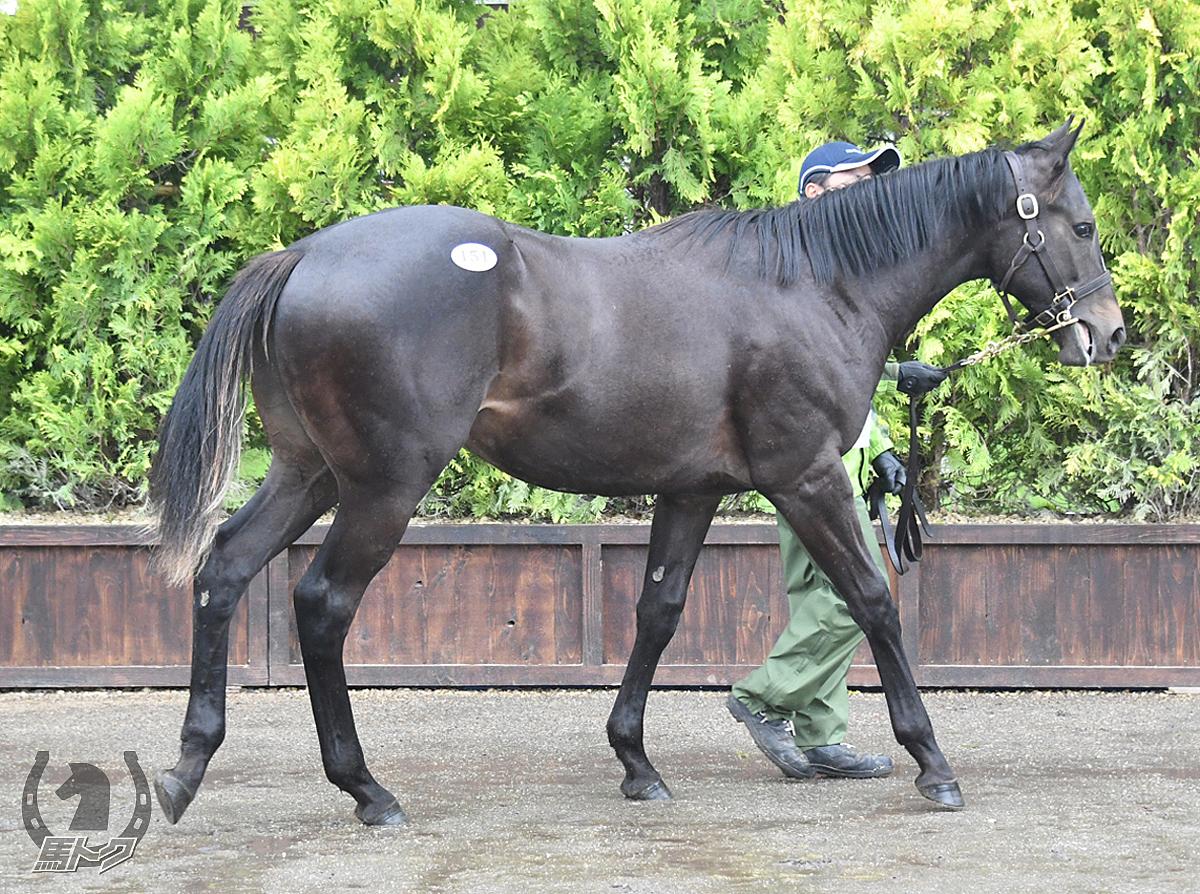 ミエノワールドの馬体写真