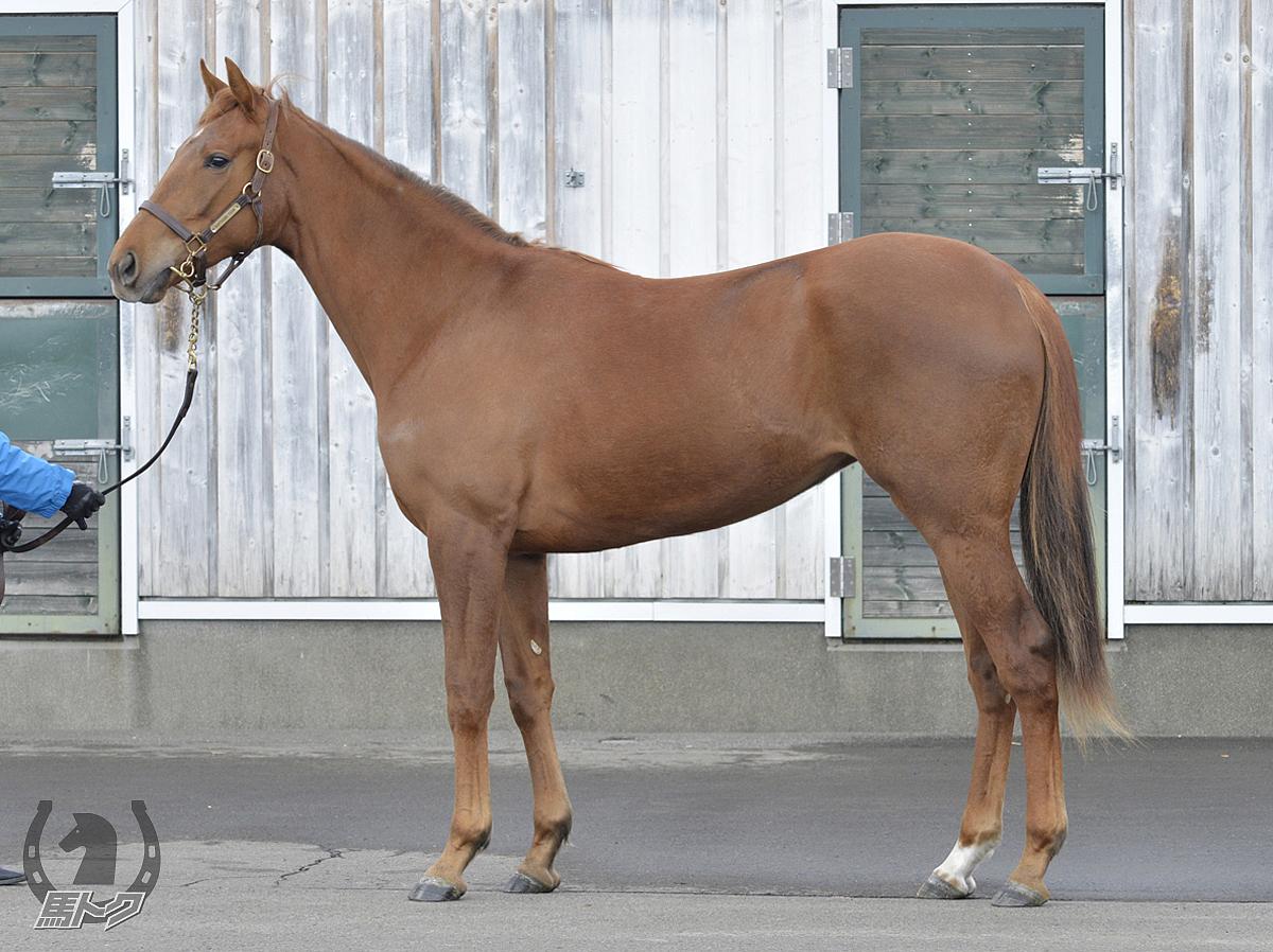 ピエルフの馬体写真