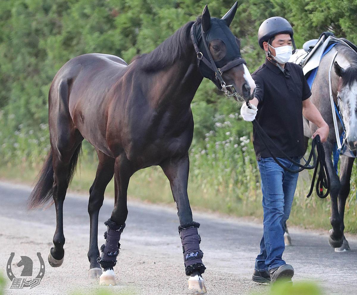アドマイヤヴェラの馬体写真