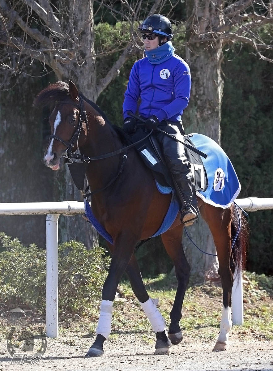 アルジャンナの馬体写真