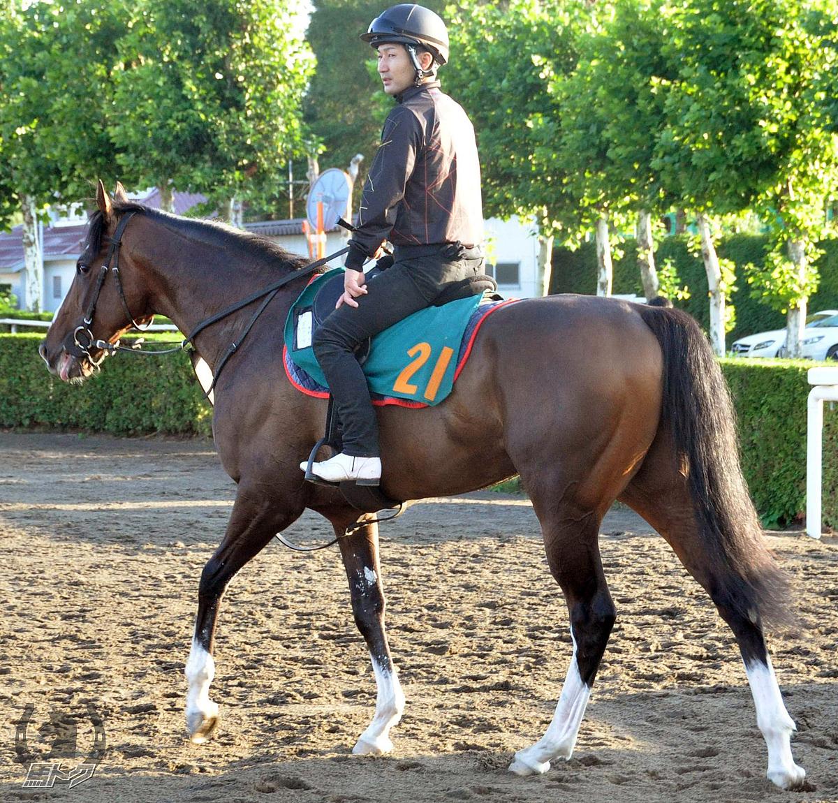 ゴルコンダの馬体写真