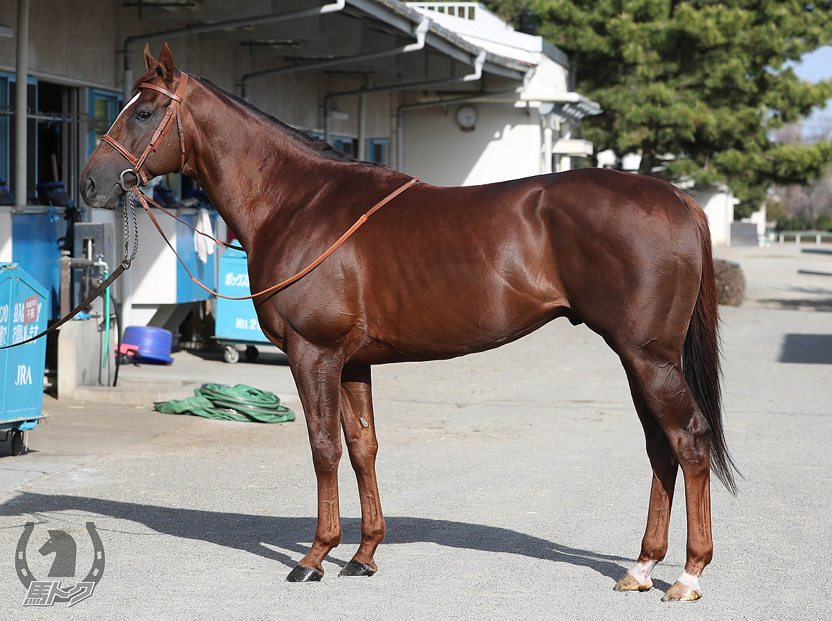 サリオスの馬体写真