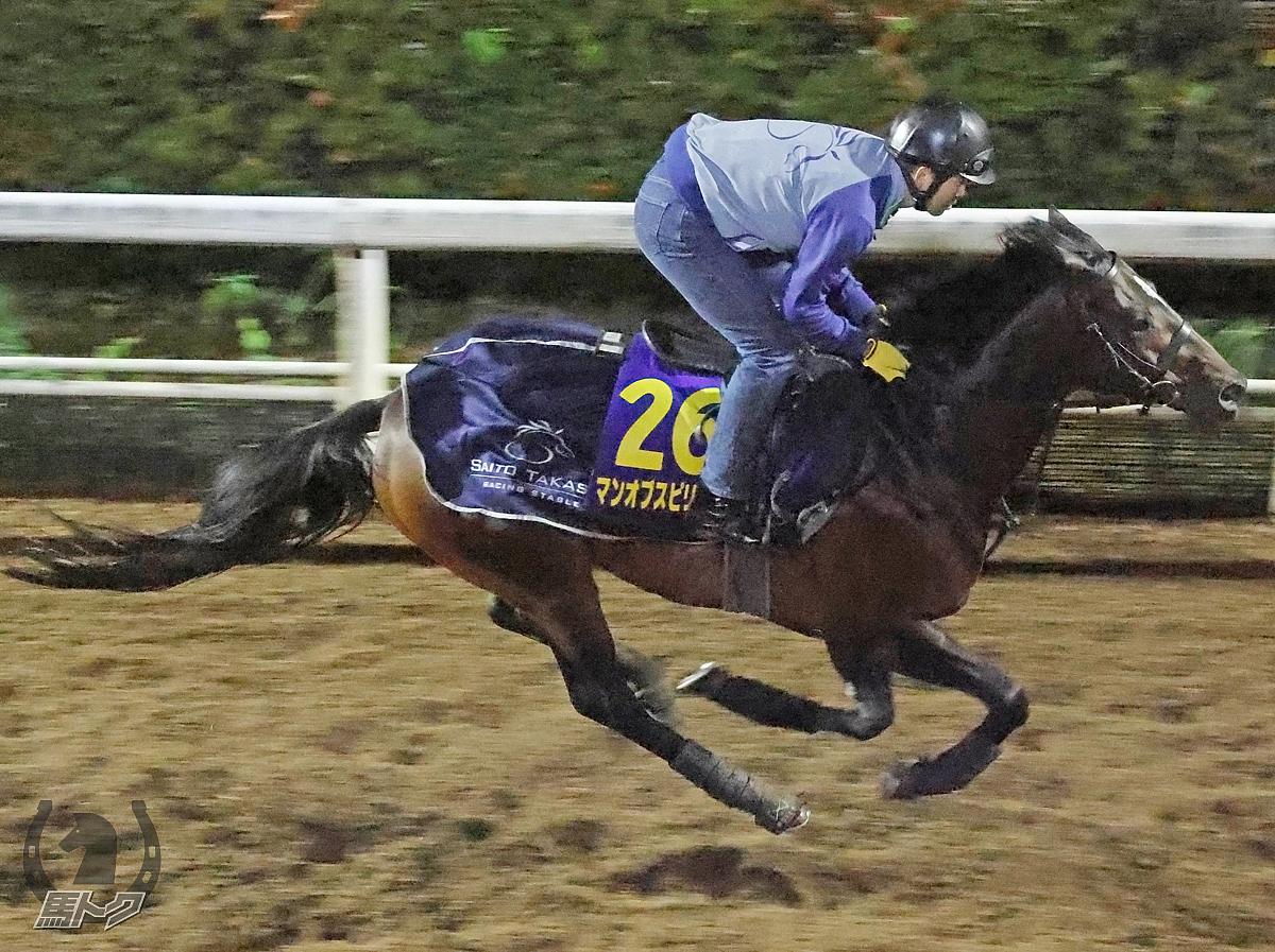 マンオブスピリットの馬体写真
