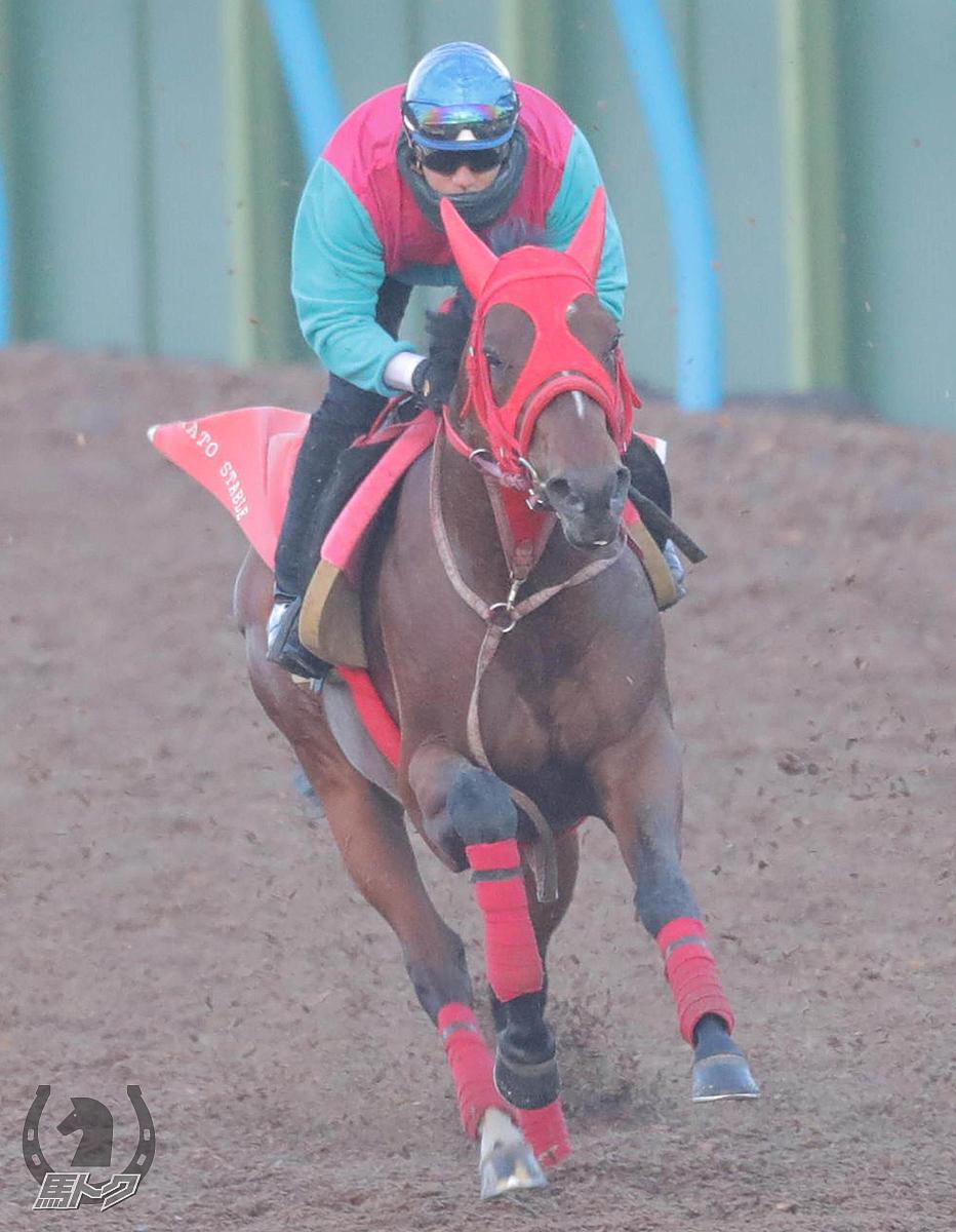 ヴェスターヴァルトの馬体写真