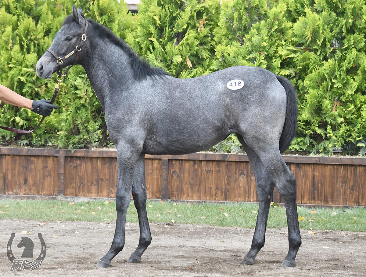 アドマイヤパンドラの馬体写真