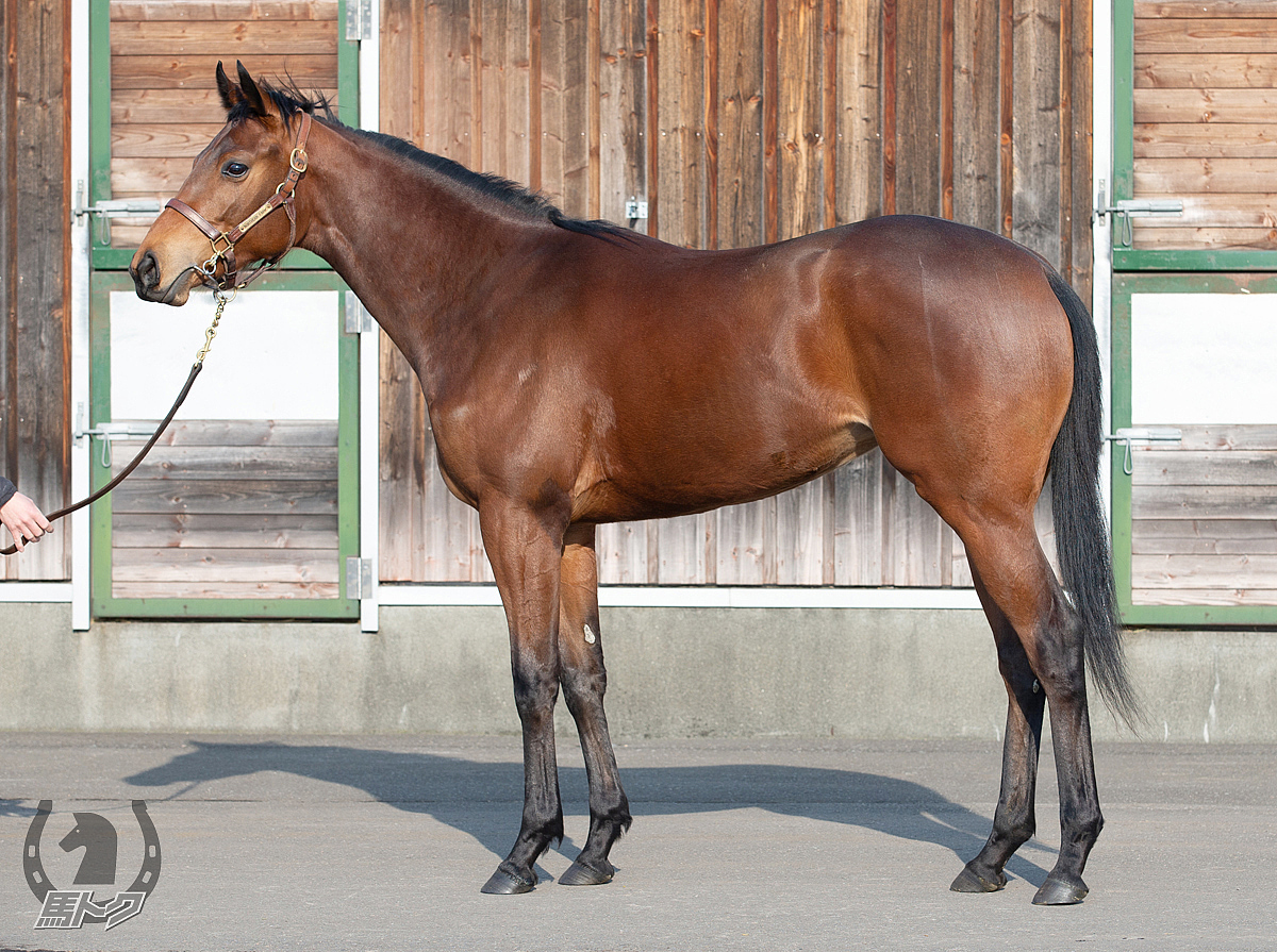 ジルジェンティの馬体写真