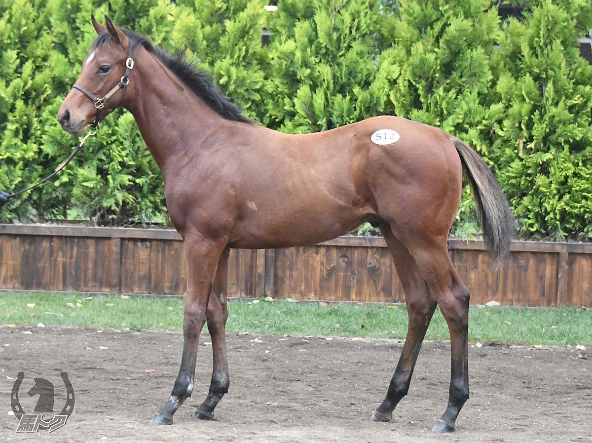 アドマイヤグルスの馬体写真