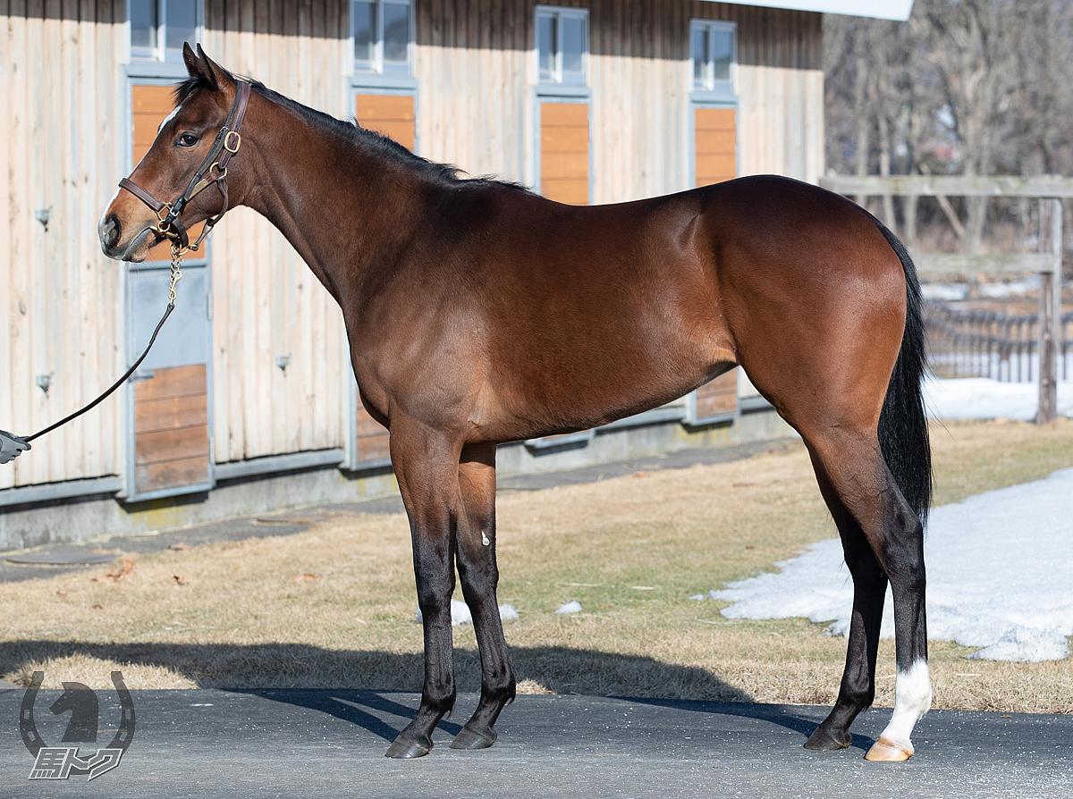 シャンボールロッソの馬体写真