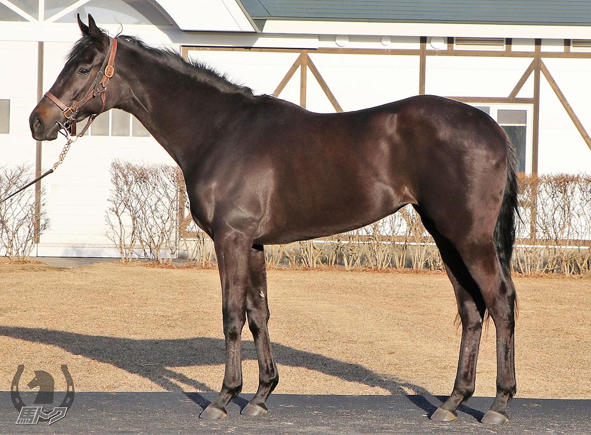 ペルラネーラの馬体写真