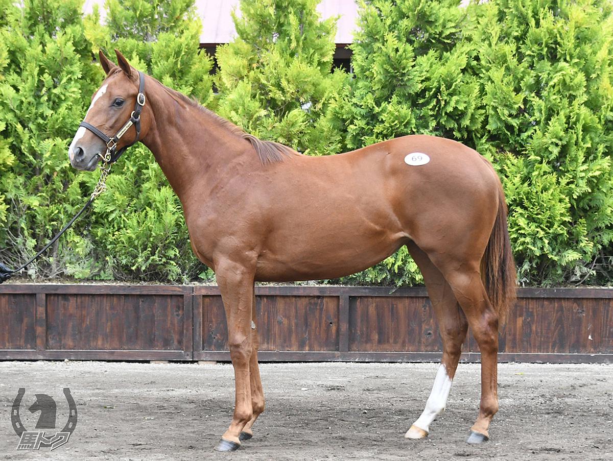 エオスモンの馬体写真