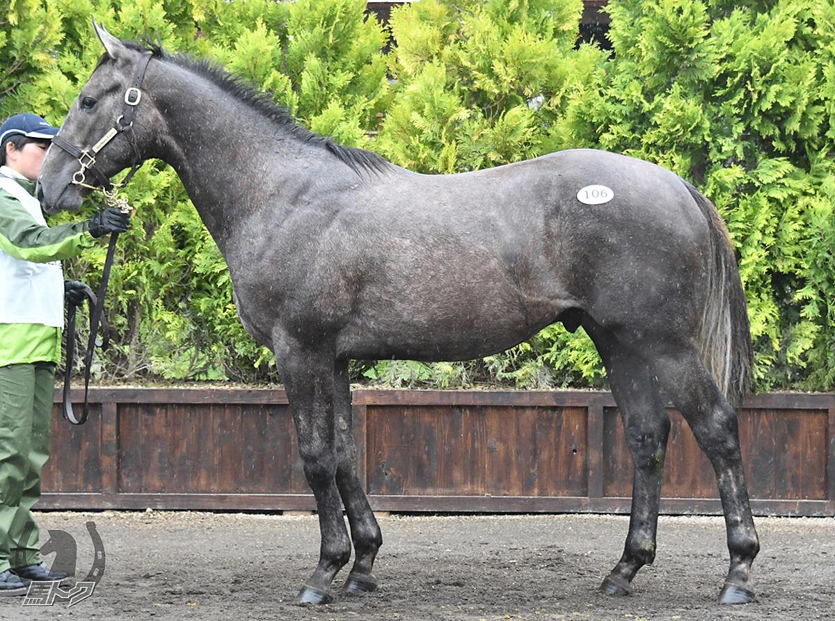 アネクスペクティドの馬体写真