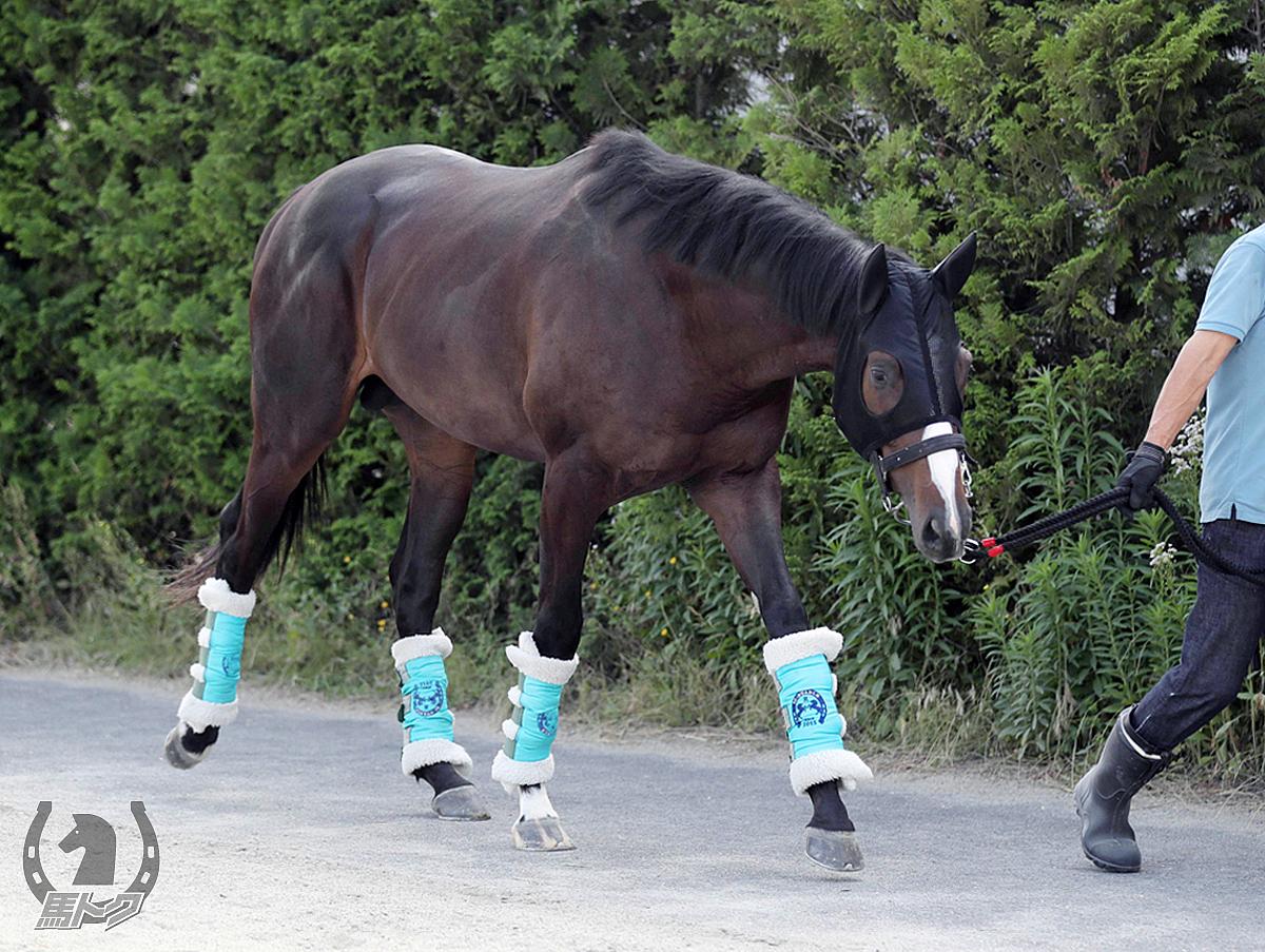 シルヴェリオの馬体写真