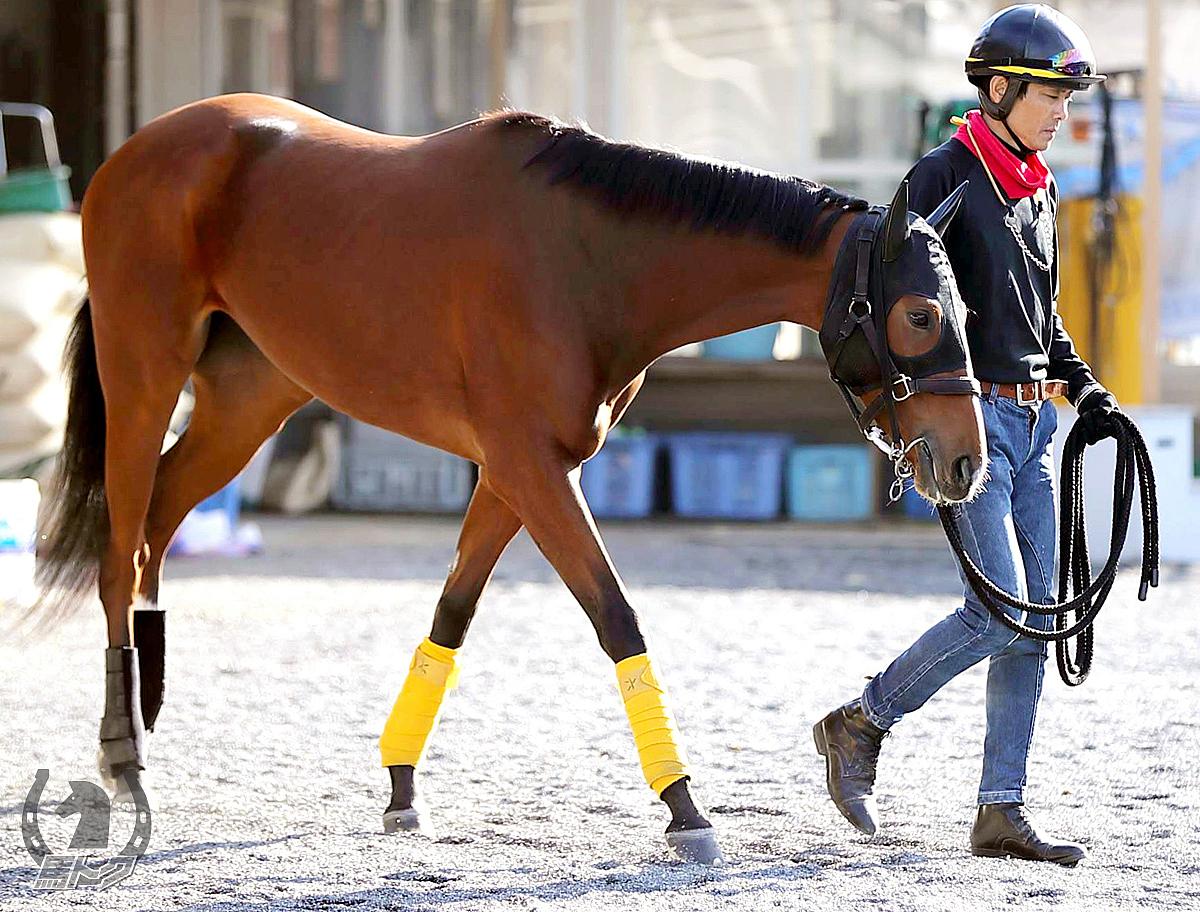 ライティアの馬体写真
