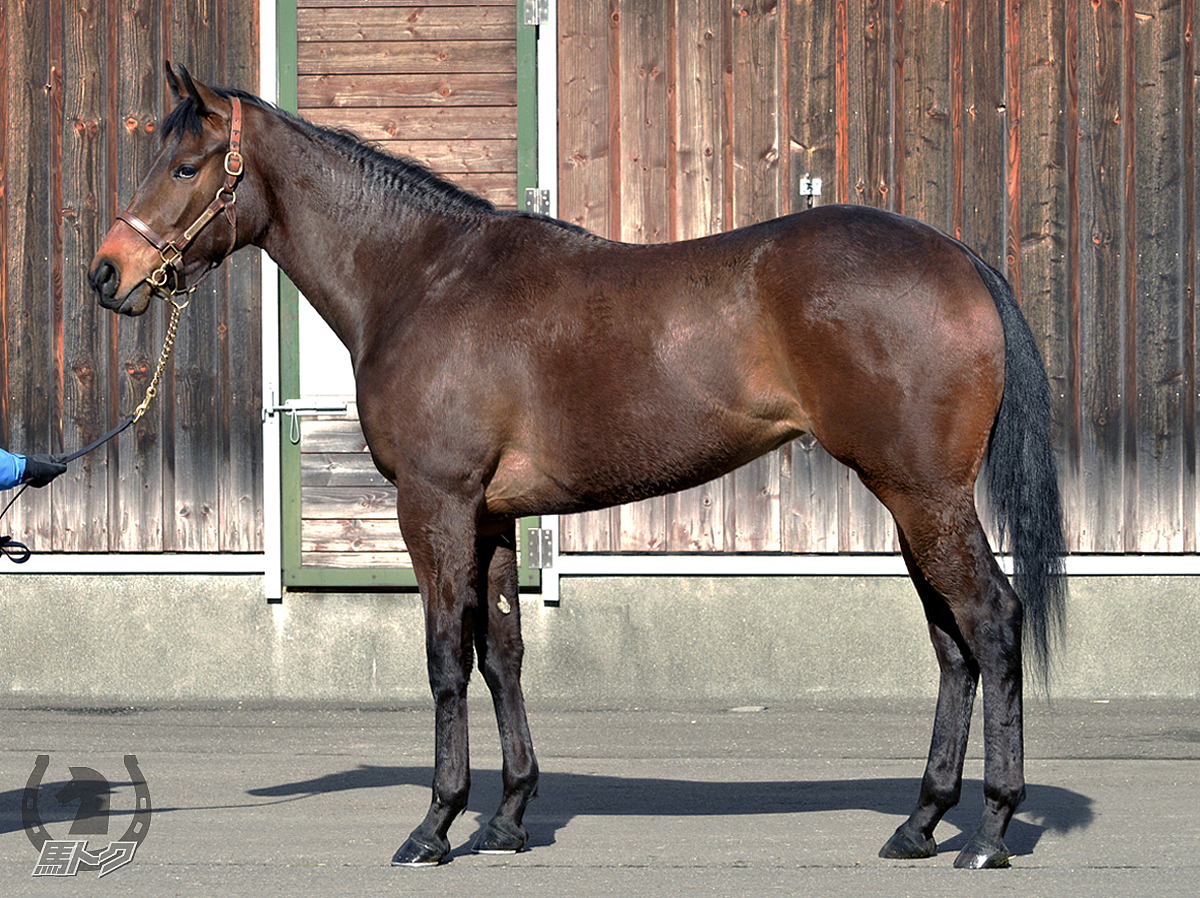 シャリーアルマリカの馬体写真