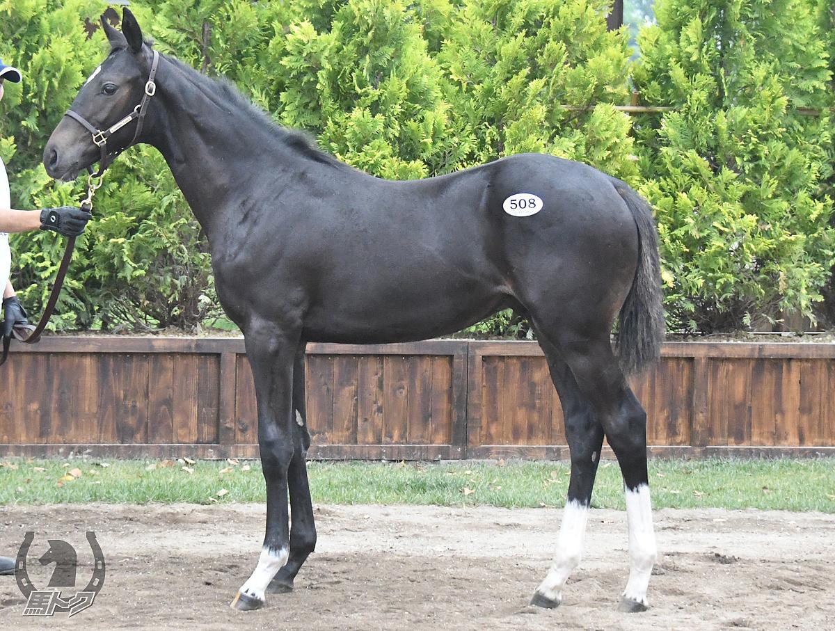 ソウルユニバンスの馬体写真