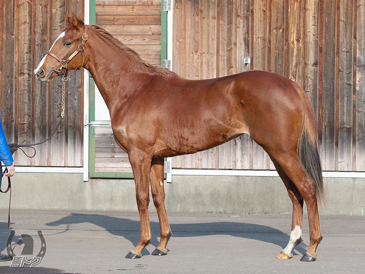 ファーストフォリオの馬体写真