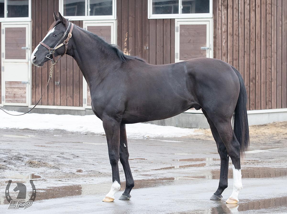ノーエクスキューズの馬体写真