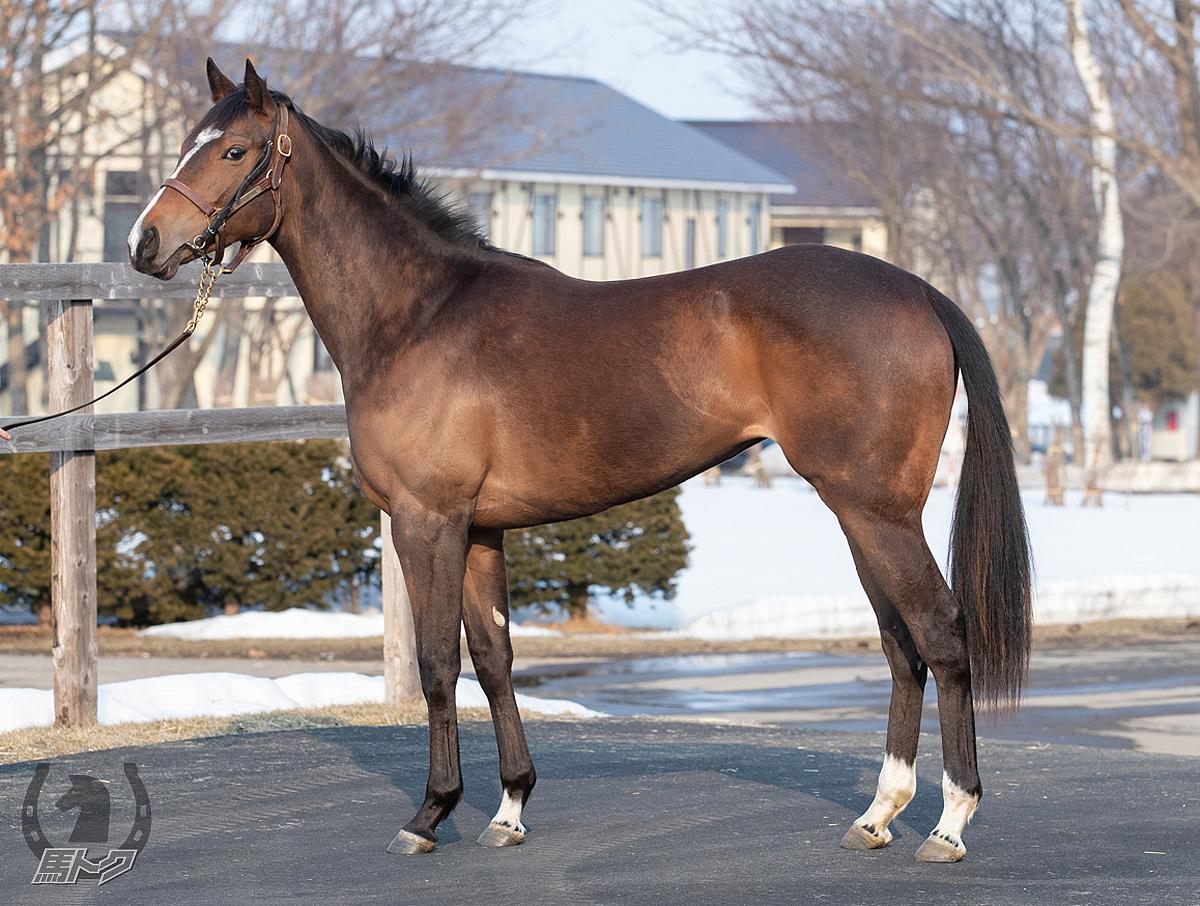 クロワドフェールの馬体写真