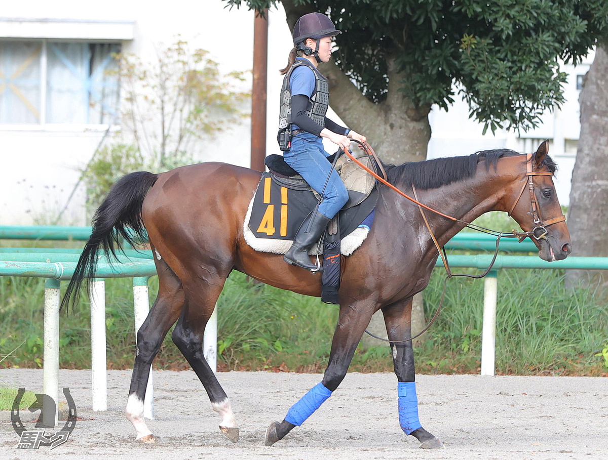 フィリオアレグロの馬体写真