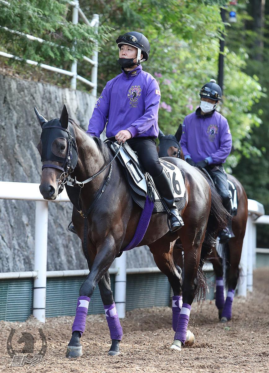 ポタジェの馬体写真