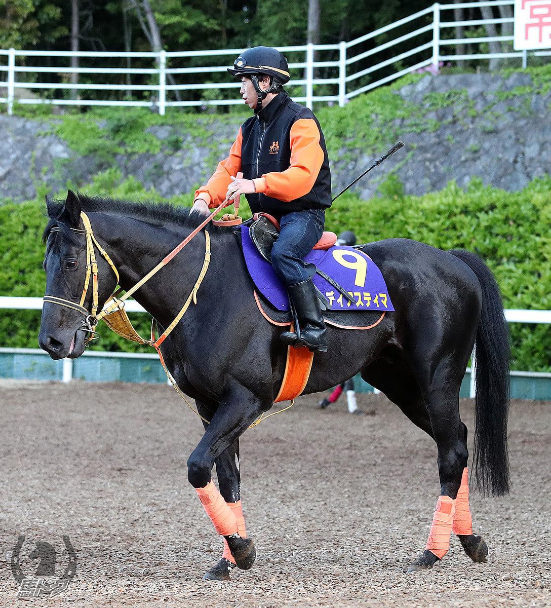 ディアスティマの馬体写真