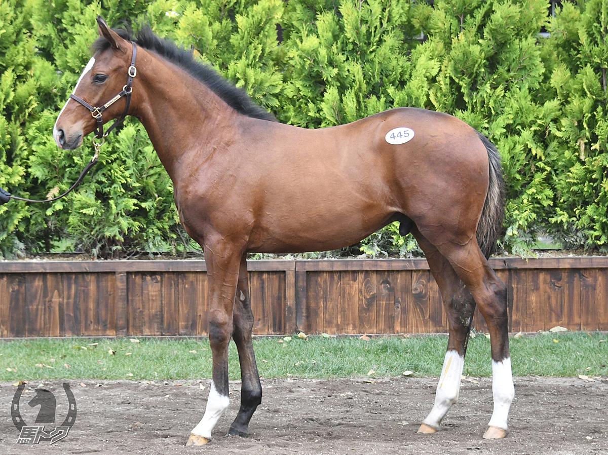 サトノレガシーの馬体写真