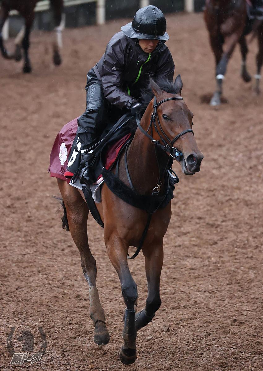 フェアレストアイルの馬体写真