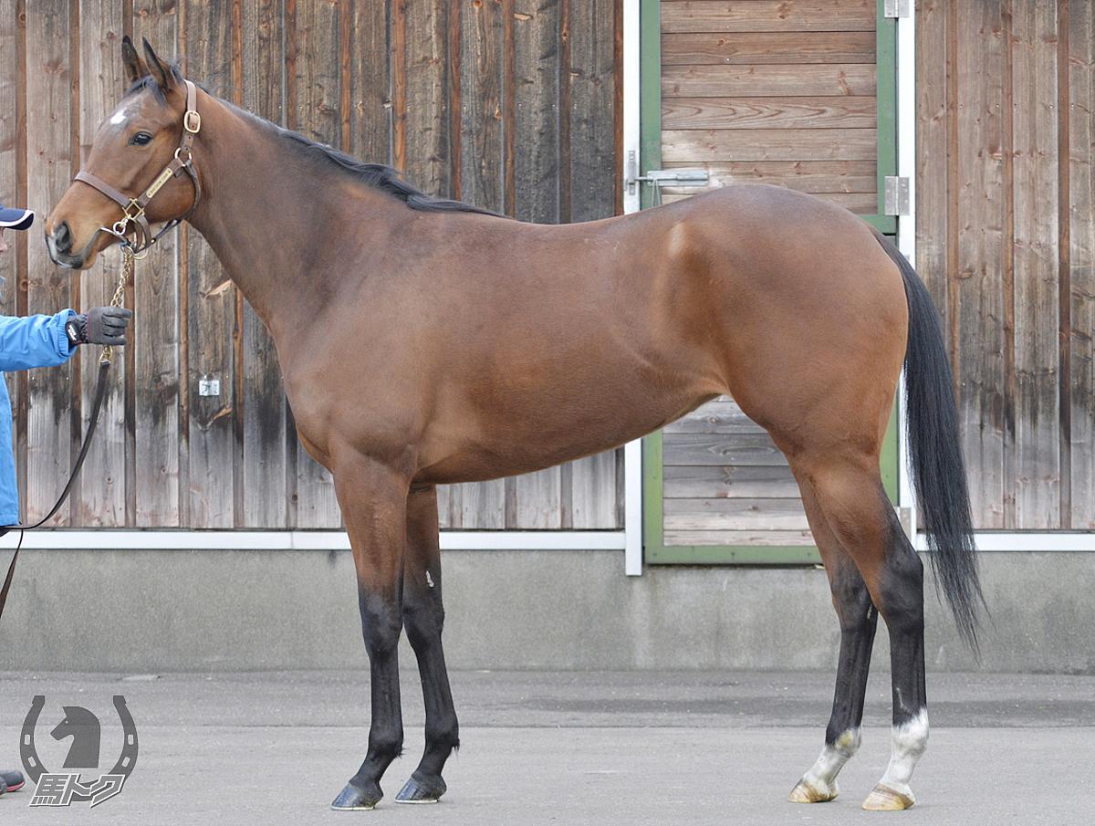 カトゥルスフェリスの馬体写真