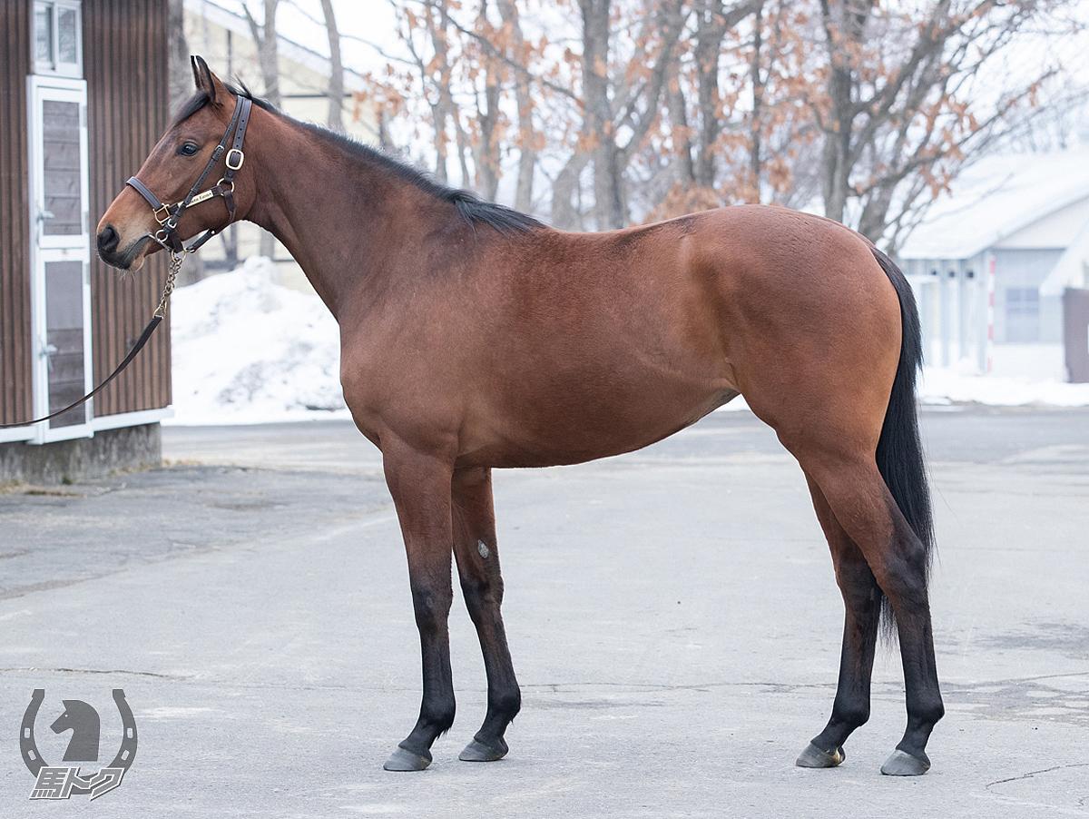 タイズオブハートの馬体写真