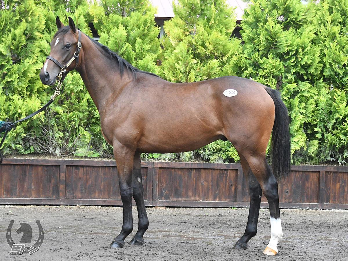 ローレリストの馬体写真