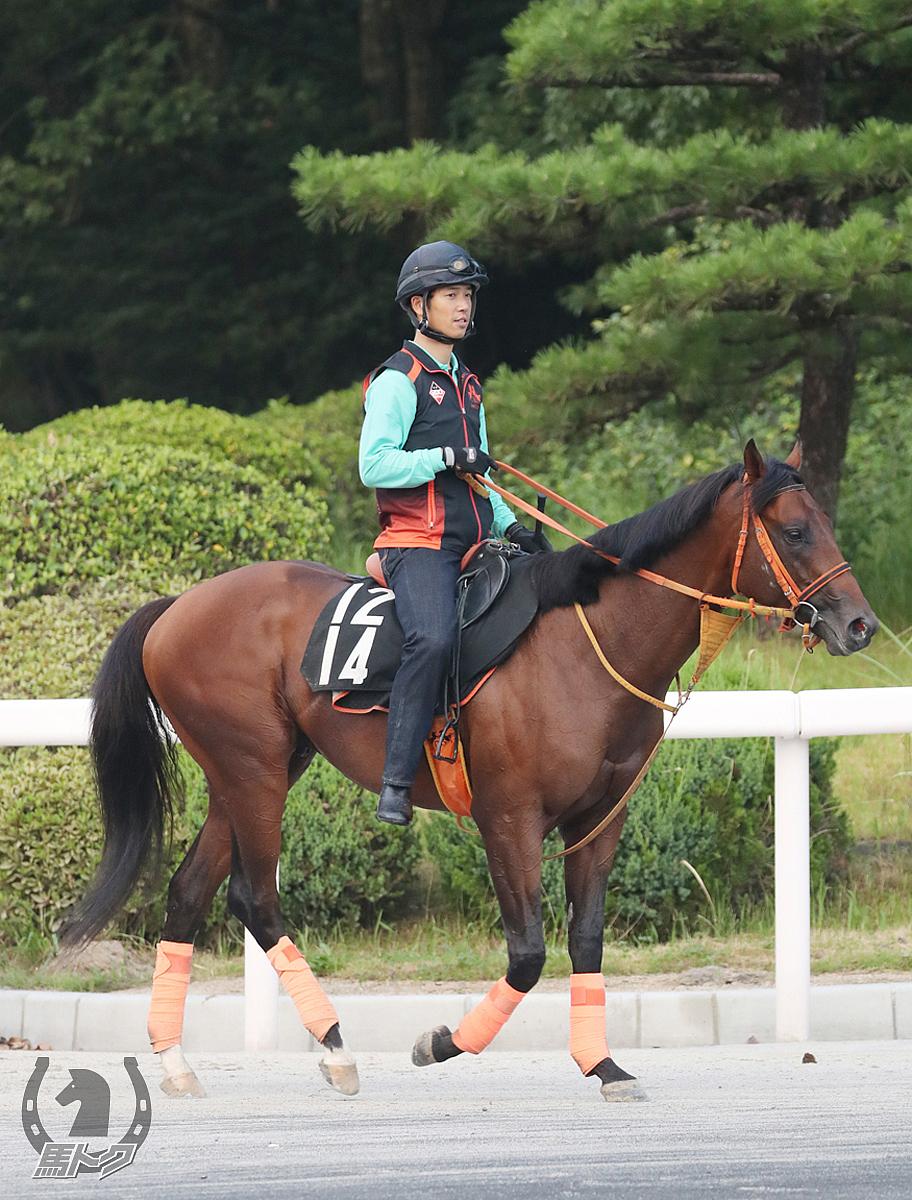 ライトウォーリアの馬体写真