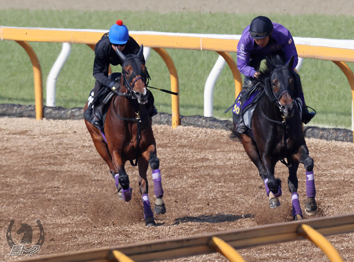 ジュンライトボルトの馬体写真
