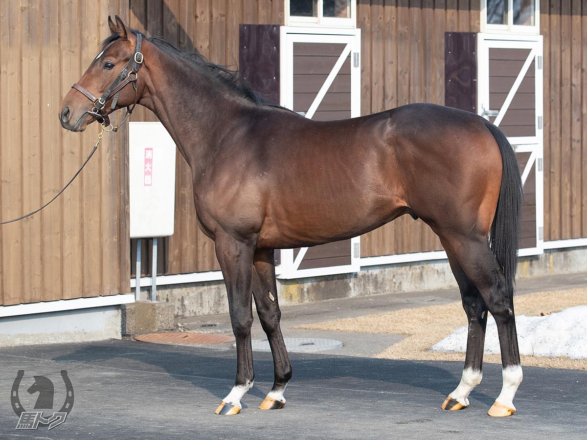 タイダルフォースの馬体写真