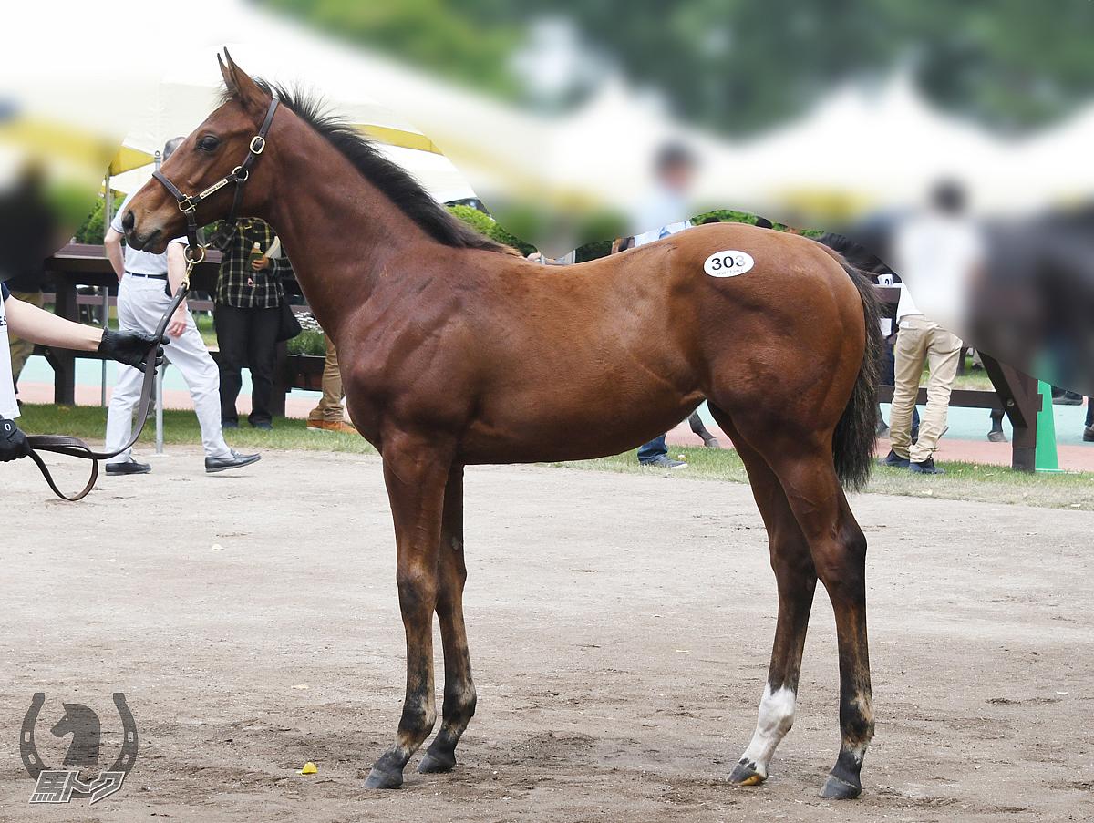 ディヴィニティの馬体写真
