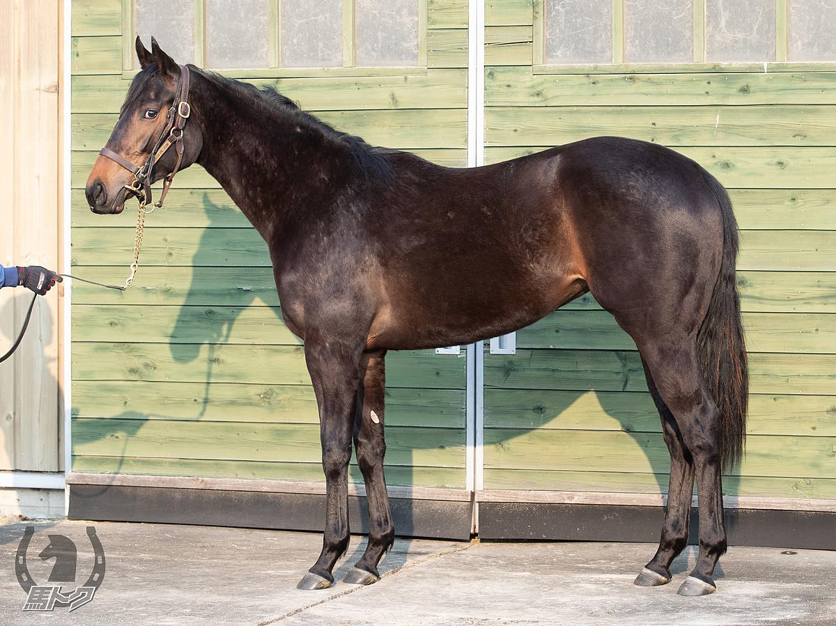 シェーネメロディの馬体写真